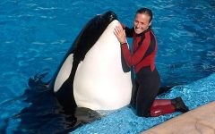 Tilikum's Death is a Tragic Loss for Seaworld